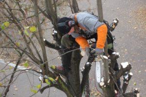 Quelques conseils pour mieux élaguer un arbre